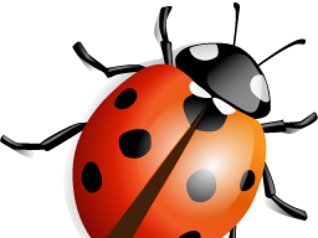 Illustrated Ladybug